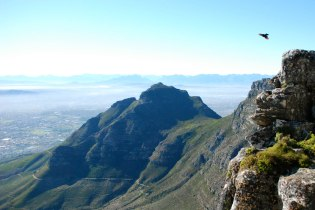 Bird with a view, Table Mountain