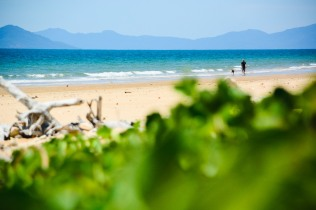 Man walks dog, Mission Beach