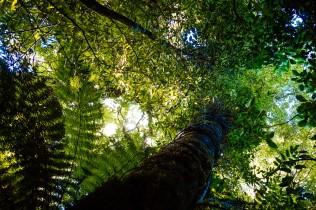 Stop and look up. Hatu Patu descends through this.