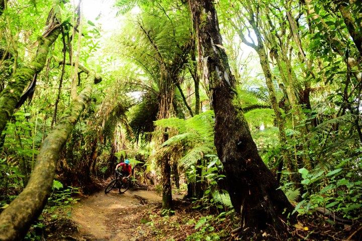 Rotorua_full_Bicknell-1