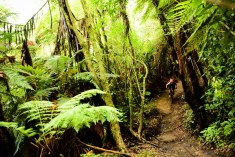 Rotorua_full_Camm