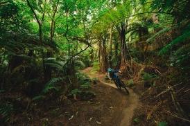 Welcome to the Rotorua Redwoods (Paris Gore)