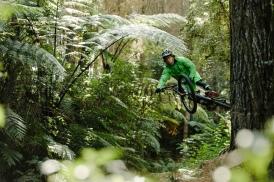 Flying chameleon, Mitch Ropelato (Paris Gore)
